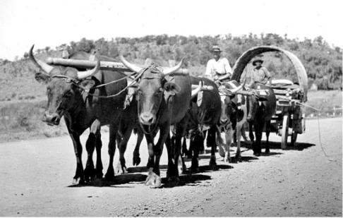 oxen-wagon-cc