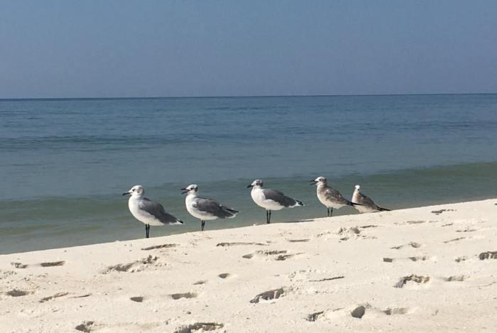 seagullsinarow